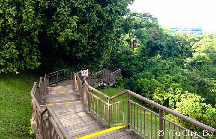 Marang Trail nhìn từ trên đỉnh Mount Faber Park
