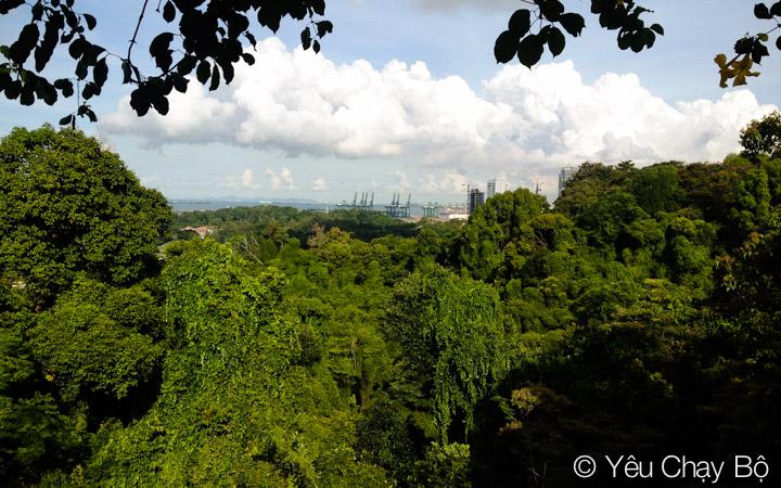 Rừng cây của khu bảo tồn nhìn từ Faber Walk