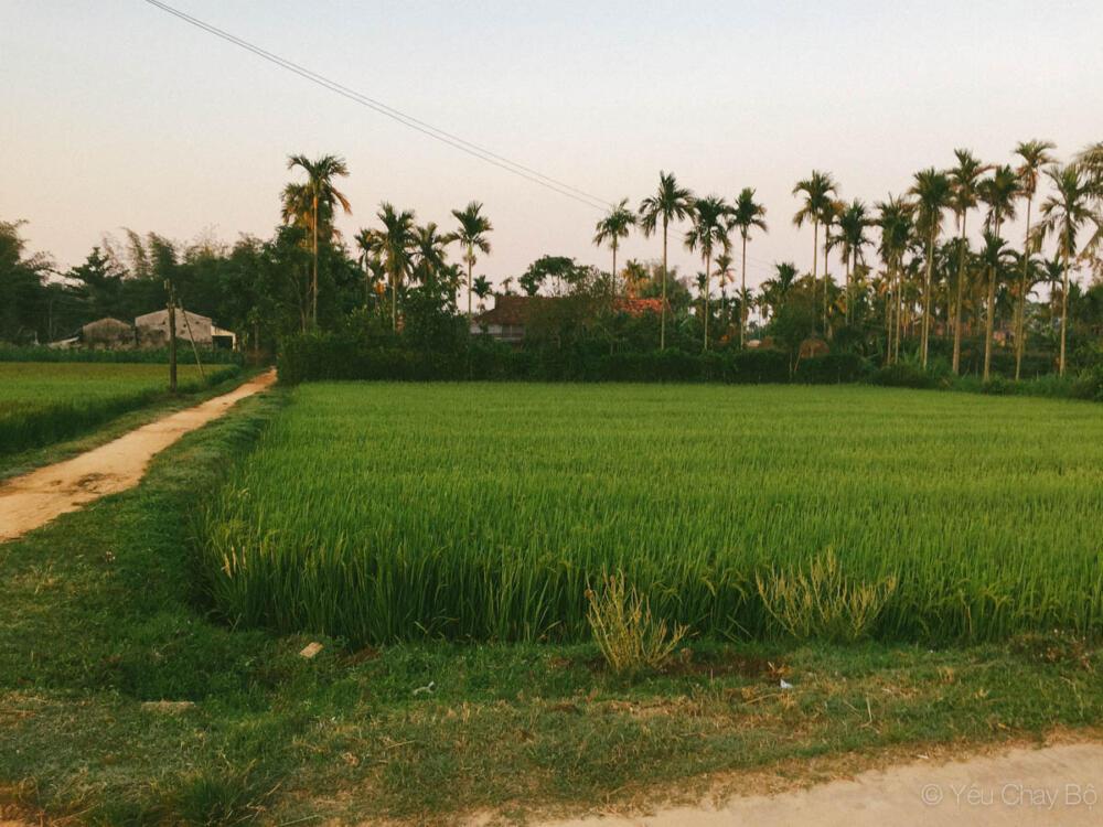 Một góc ruộng lúa nhỏ
