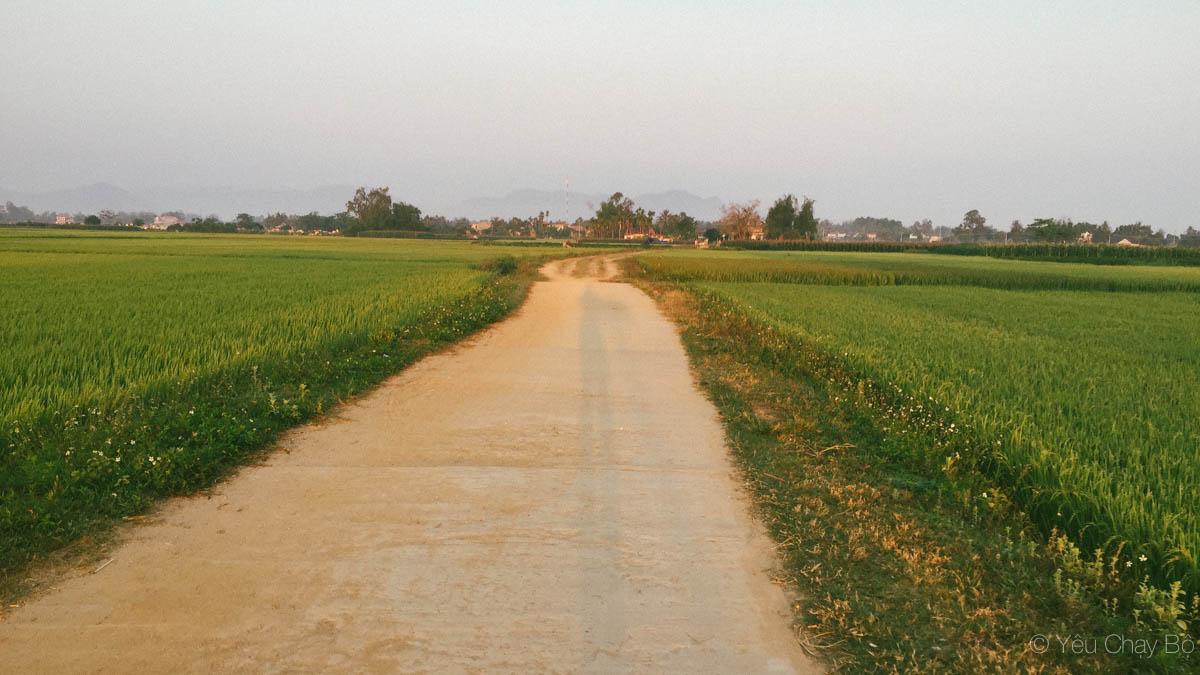 Về quê Quảng Ngãi, chạy bộ ngắm ruộng đồng bị chó phá đám