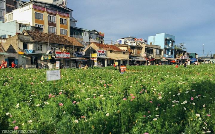 Tràn ngập vườn hoa ở Ấp Ánh Sáng - Nguyễn Văn Cừ