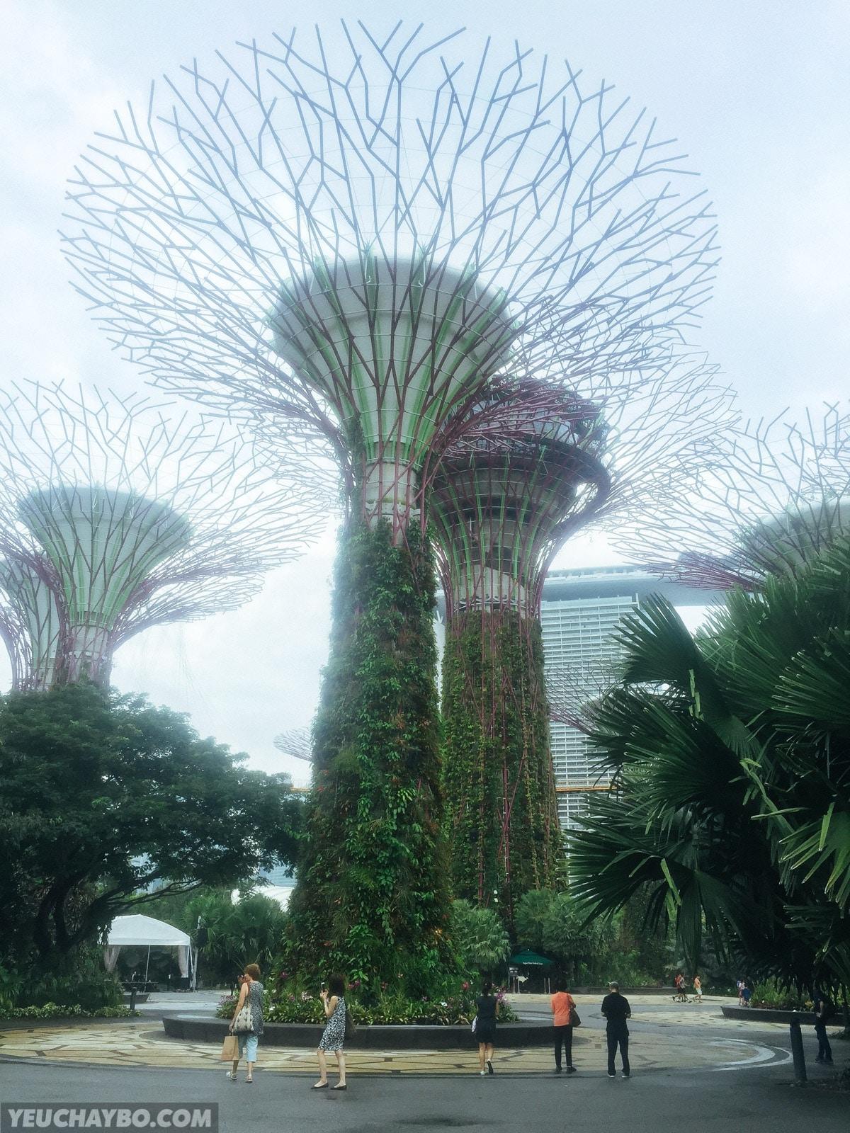 Các tháp SuperTree ở khu vực trung tâm của Gardens by the Bay